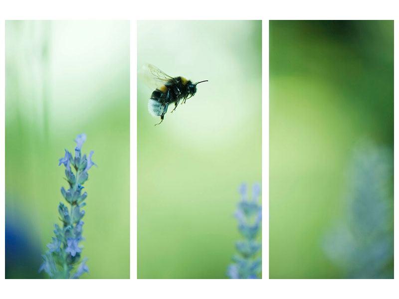 Aluminiumbild 3-teilig Die Biene