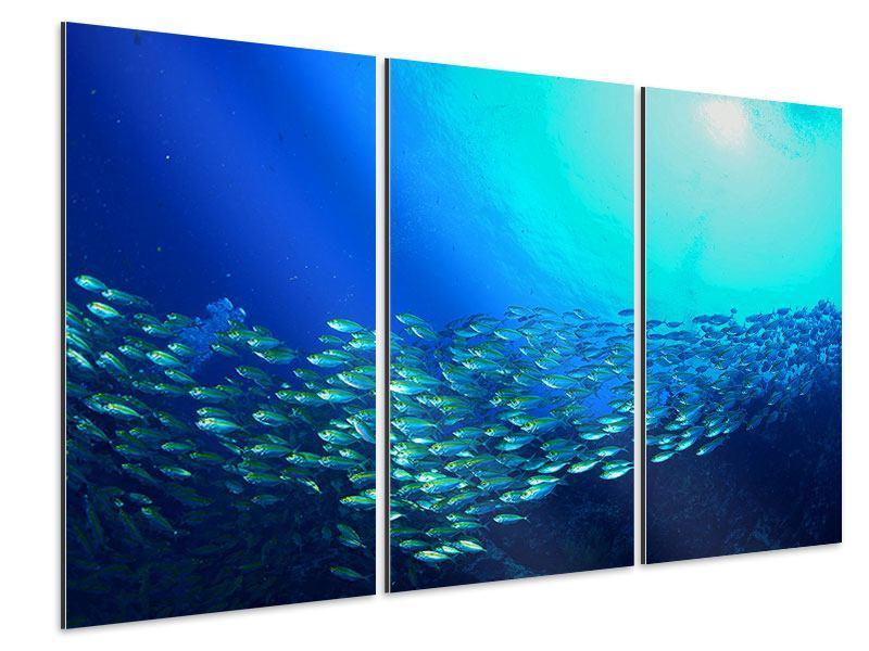 Aluminiumbild 3-teilig Fischschwarm