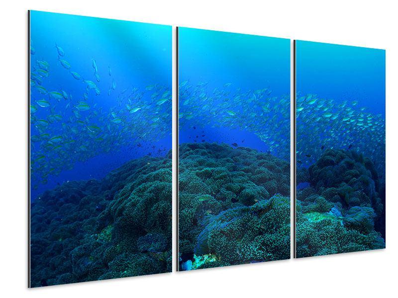 Aluminiumbild 3-teilig Fischschwärme