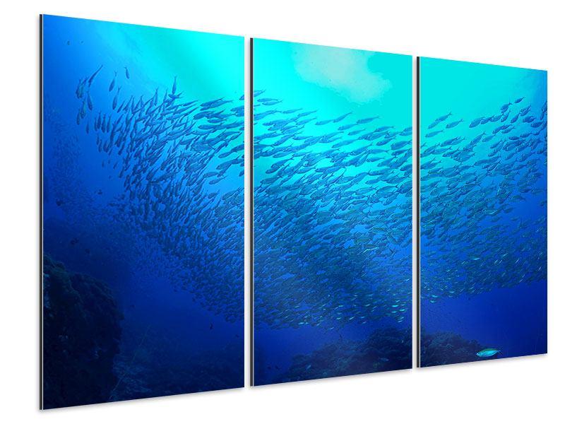 Aluminiumbild 3-teilig Fischwelt