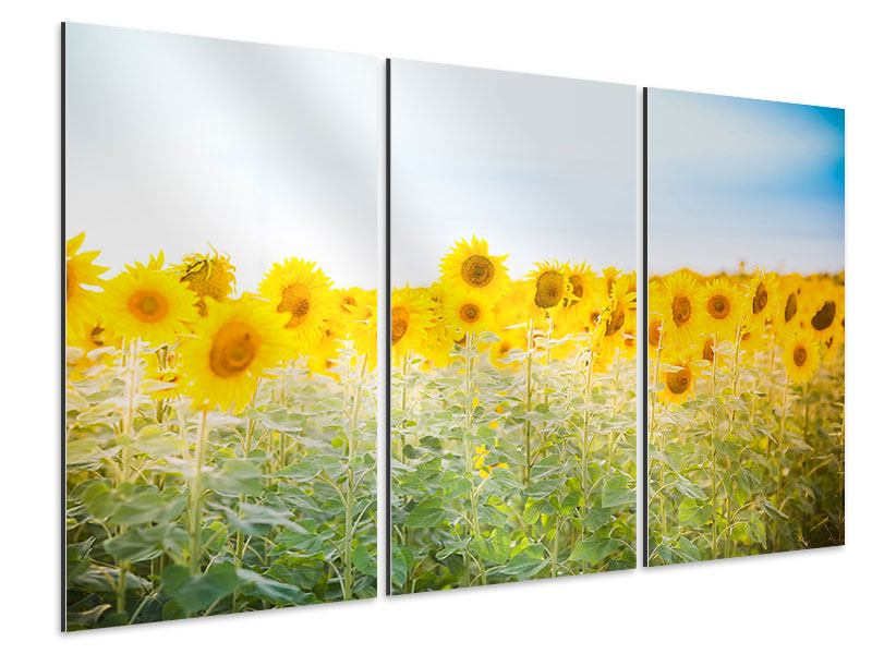 Aluminiumbild 3-teilig Im Sonnenblumenfeld