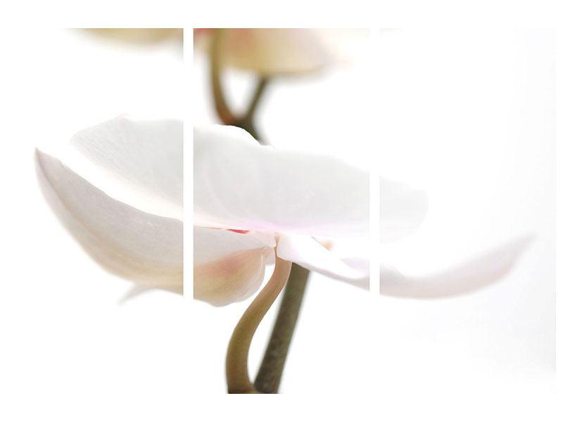 Aluminiumbild 3-teilig XXL Orchideenblüte