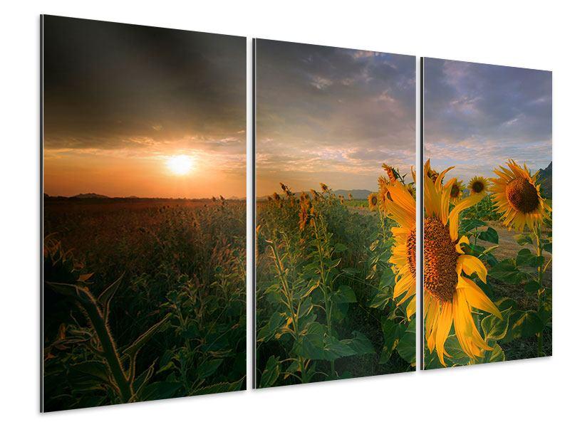 Aluminiumbild 3-teilig Sonnenblumen im Lichtspiel