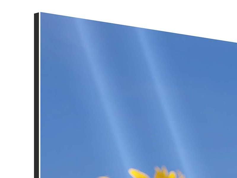 Aluminiumbild 3-teilig Himmlische Sonnenblumen