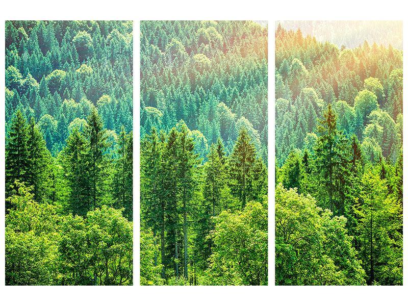 Aluminiumbild 3-teilig Der Waldhügel