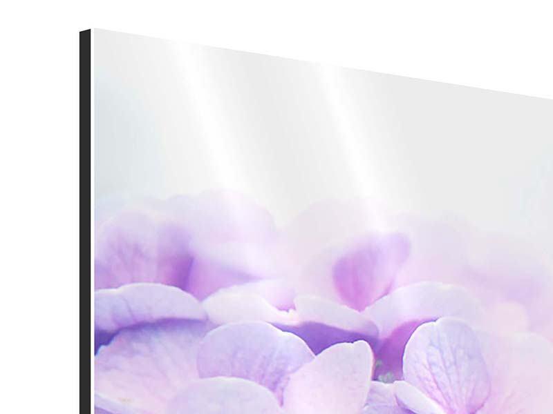 Aluminiumbild 3-teilig Hortensien