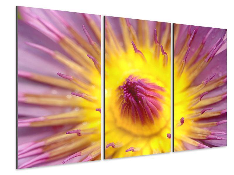 Aluminiumbild 3-teilig XXL-Lotus
