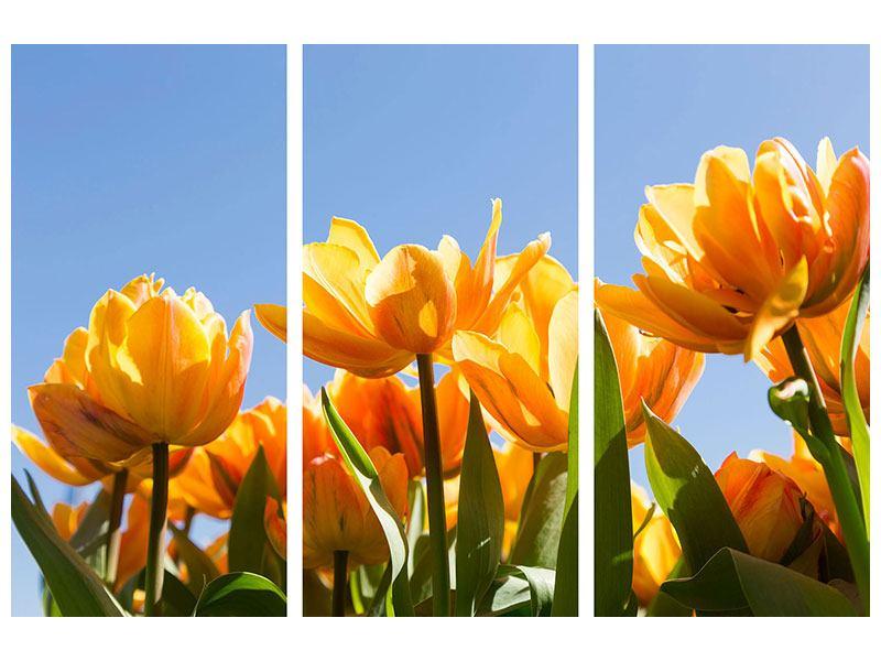 Aluminiumbild 3-teilig Märchenhafte Tulpen