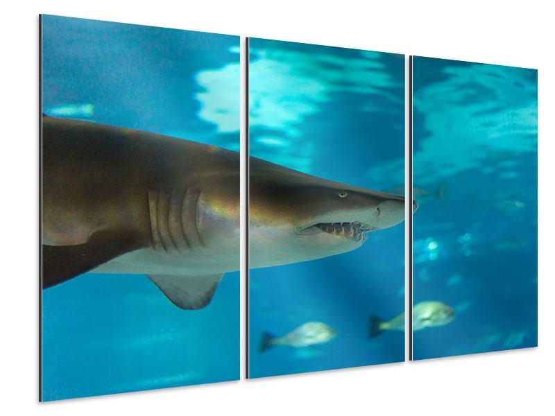 Aluminiumbild 3-teilig Der Haifisch