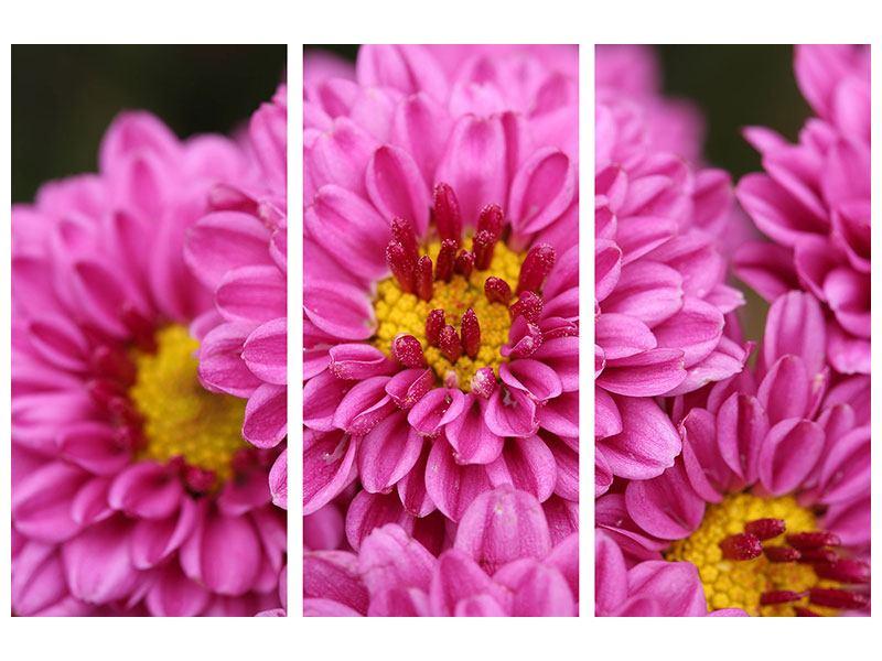 Aluminiumbild 3-teilig Chrysanthemen