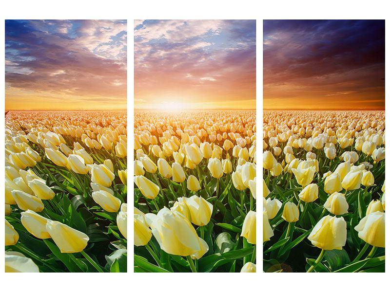 Aluminiumbild 3-teilig Sonnenaufgang bei den Tulpen