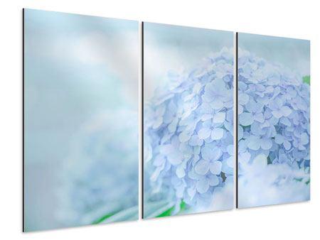 Aluminiumbild 3-teilig Die Hortensie