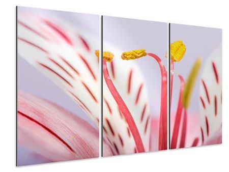 Aluminiumbild 3-teilig Close Up Die exotische Schönheit