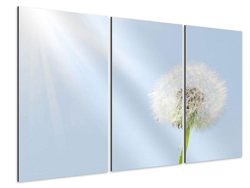 Aluminiumbild 3-teilig Der Löwenzahn im Sonnenstrahl