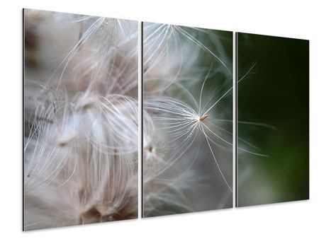 Aluminiumbild 3-teilig Close up Blütenfasern