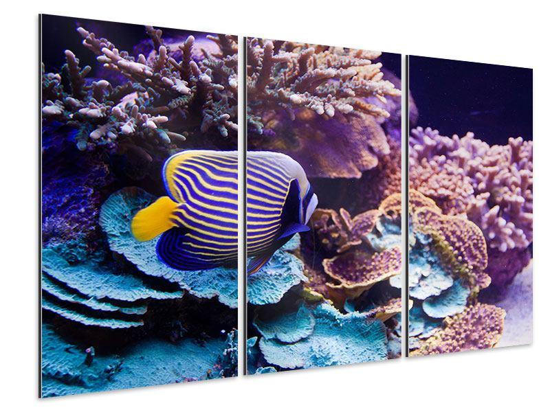 Aluminiumbild 3-teilig Faszination Unterwasser