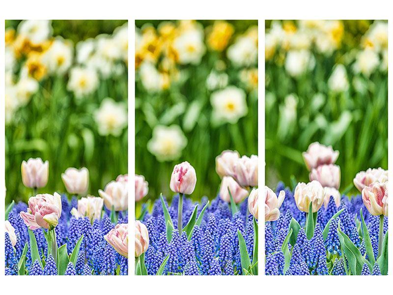 Aluminiumbild 3-teilig Ein Garten mit Tulpen