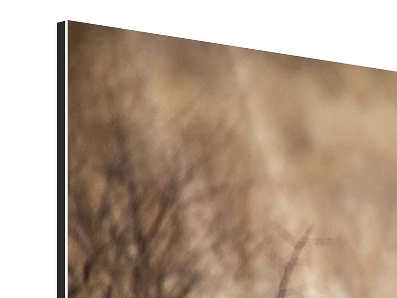 Aluminiumbild 3-teilig Eleganter Gepard