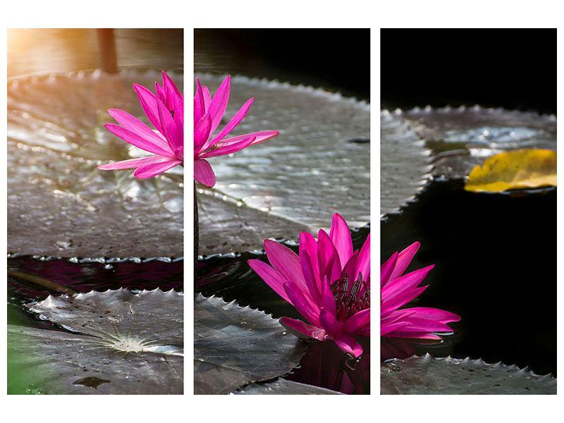 Aluminiumbild 3-teilig Seerosen im Morgentau