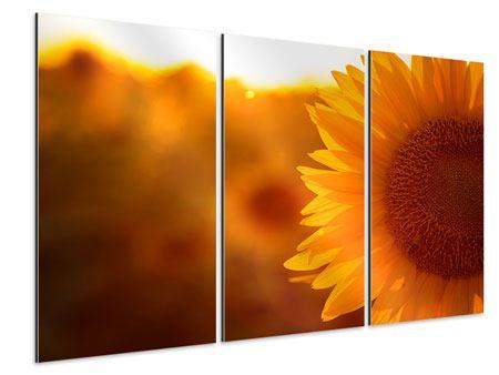 Aluminiumbild 3-teilig Macro-Sonnenblume