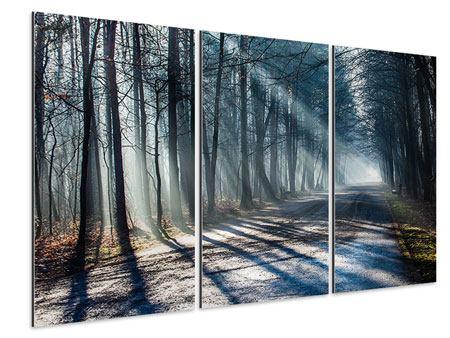 Aluminiumbild 3-teilig Wald im Lichtstrahl