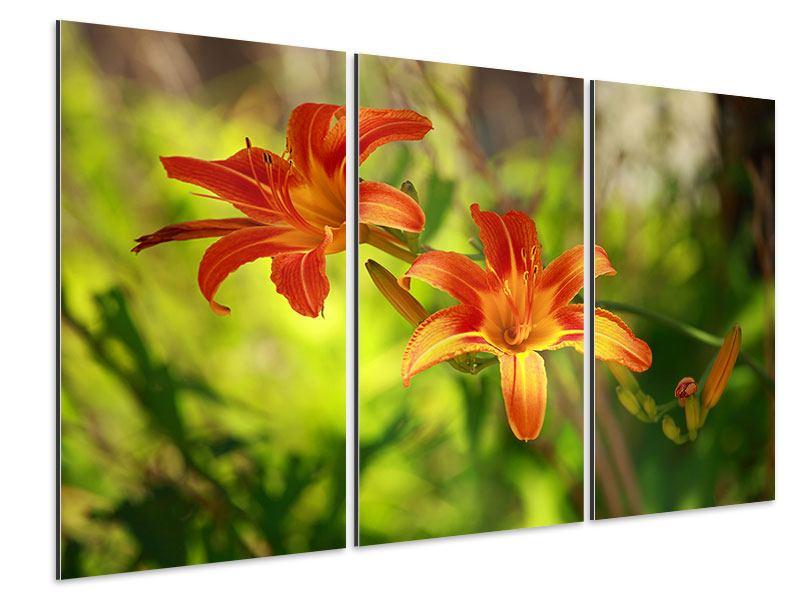 Aluminiumbild 3-teilig Lilien in der Natur