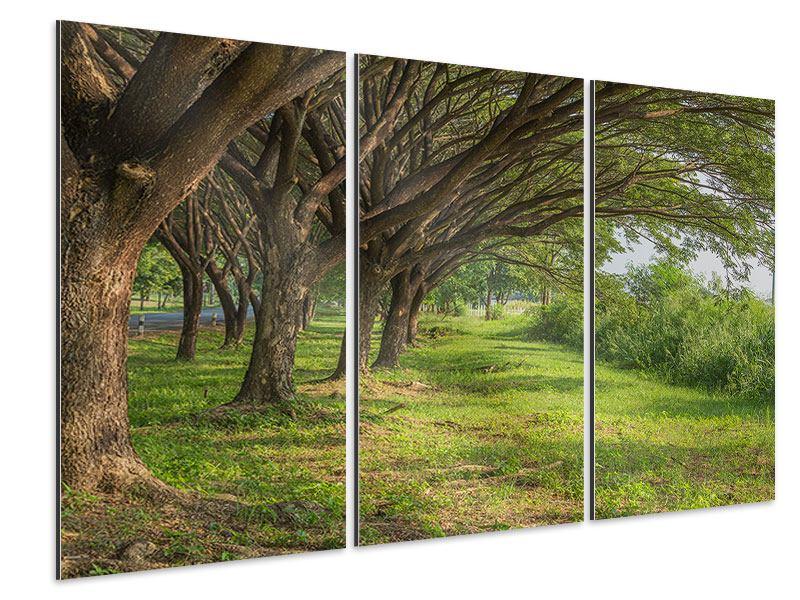 Aluminiumbild 3-teilig Alter Baumbestand