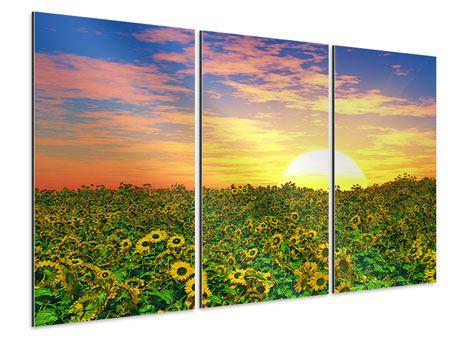 Aluminiumbild 3-teilig Blumenpanorama bei Sonnenuntergang