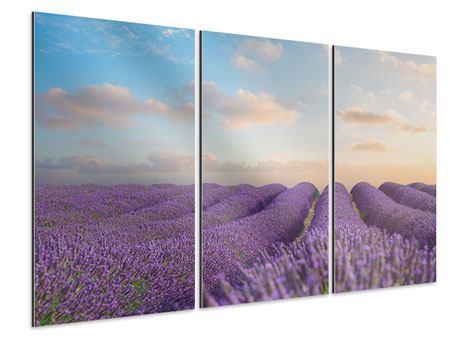 Aluminiumbild 3-teilig Das blühende Lavendelfeld