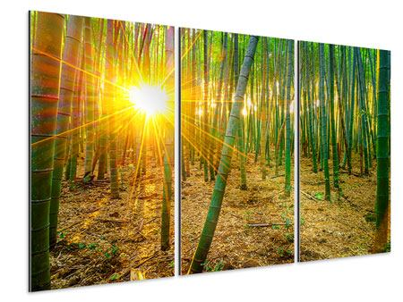 Aluminiumbild 3-teilig Bambusse