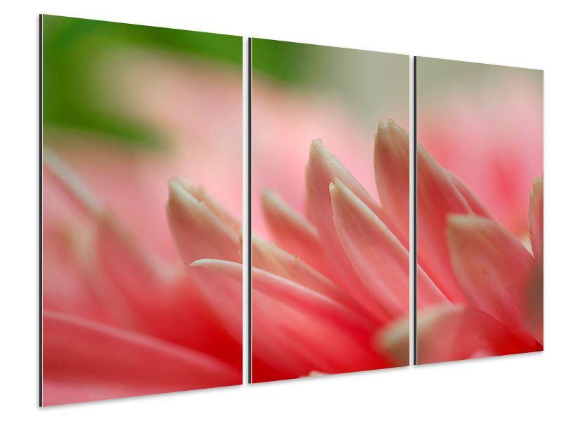 Aluminiumbild 3-teilig Close Up einer Blüte