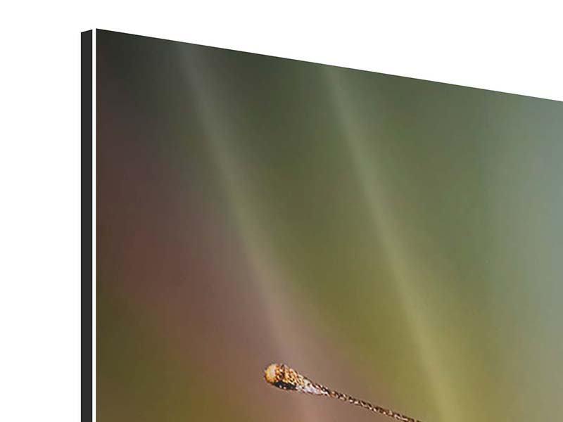 Aluminiumbild 3-teilig Der C-Falter