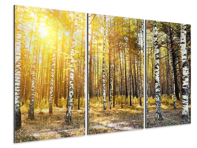 Aluminiumbild 3-teilig Birkenwald