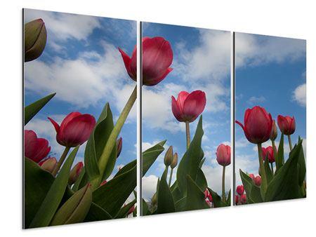 Aluminiumbild 3-teilig Tulpen im Himmel