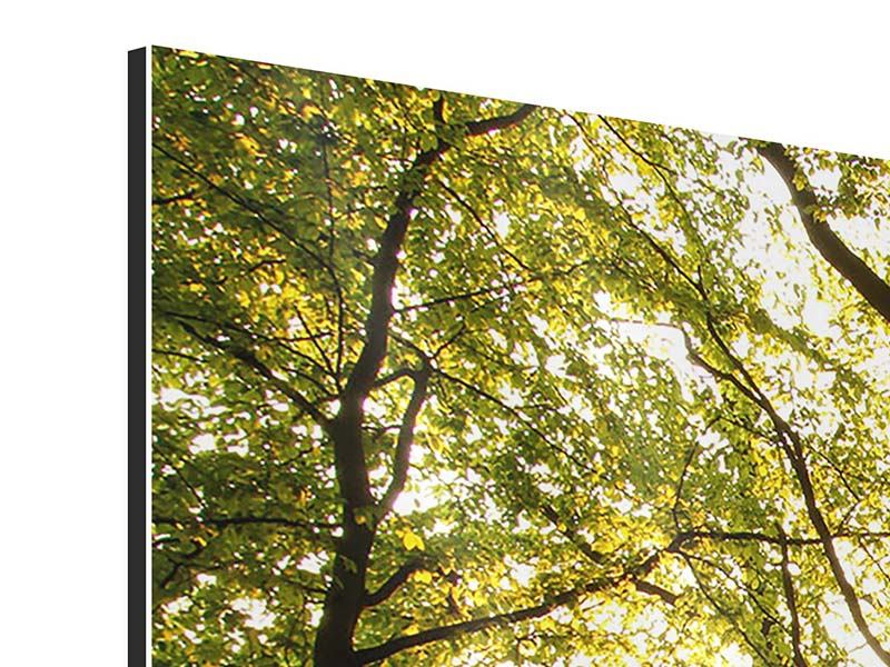 Aluminiumbild 3-teilig Sonnenuntergang zwischen den Bäumen