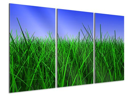 Aluminiumbild 3-teilig Im Gras