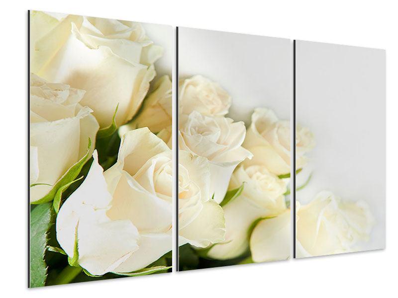 Aluminiumbild 3-teilig Weisse Rosen