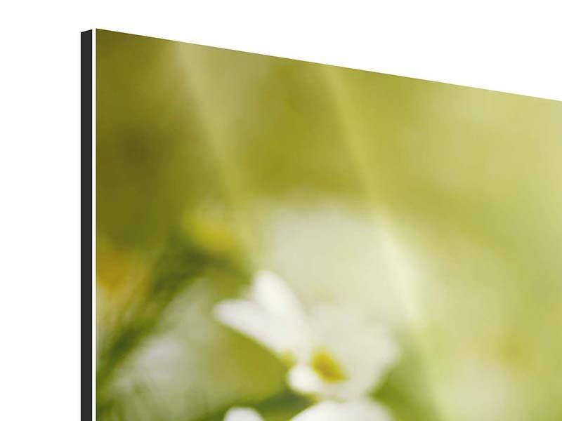 Aluminiumbild 3-teilig Die Gänseblümchen