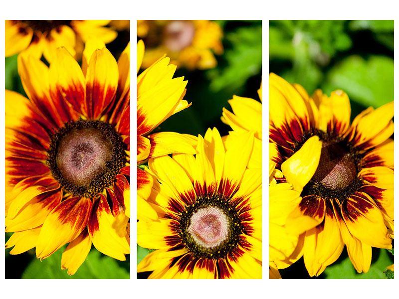 Aluminiumbild 3-teilig Reife Sonnenblumen