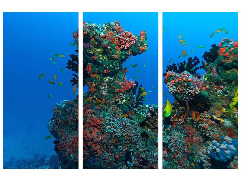 Aluminiumbild 3-teilig Die Welt der Fische