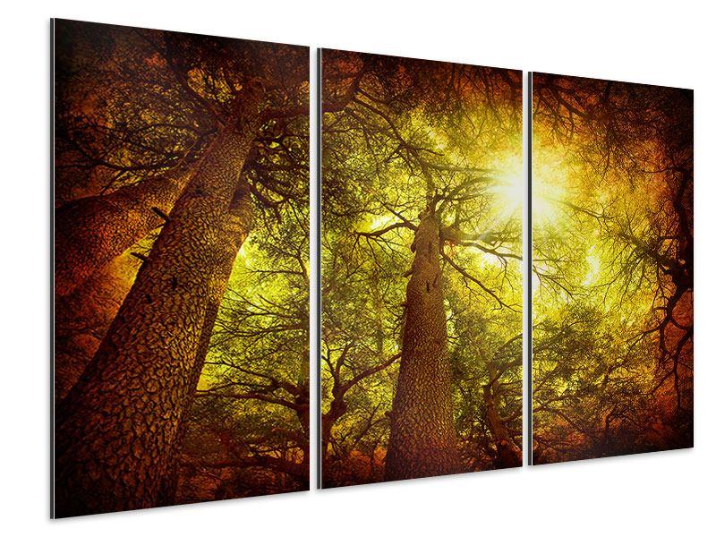 Aluminiumbild 3-teilig Cedar Baum