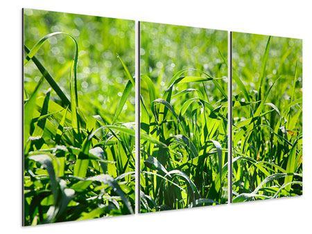 Aluminiumbild 3-teilig Sonniges Gras