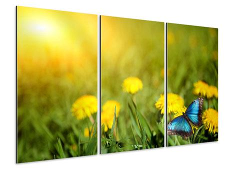 Aluminiumbild 3-teilig Der Löwenzahn und der Schmetterling
