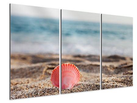 Aluminiumbild 3-teilig Die Muschel
