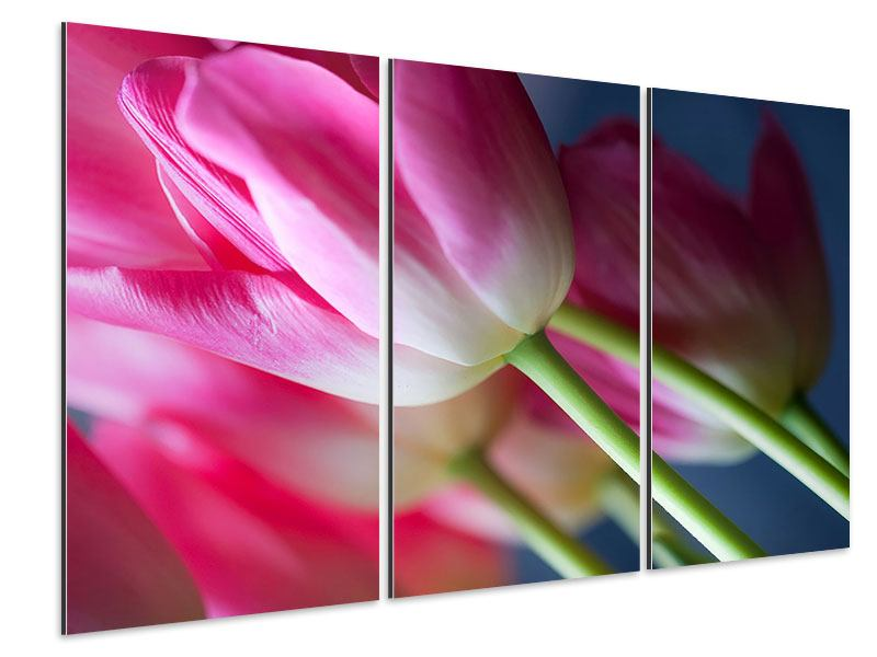 Aluminiumbild 3-teilig Makro Tulpen