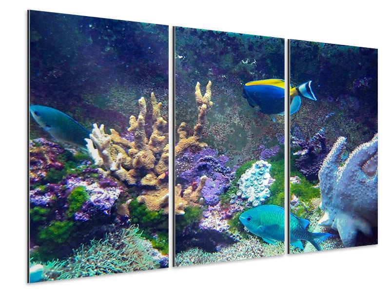 Aluminiumbild 3-teilig Fische