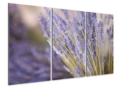 Aluminiumbild 3-teilig Lavendel XXL