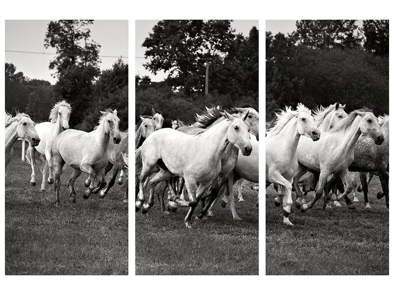 Aluminiumbild 3-teilig Die Mustang Herde