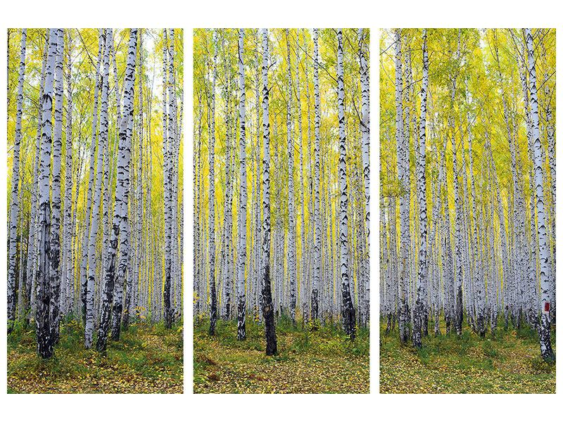 Aluminiumbild 3-teilig Herbstlicher Birkenwald
