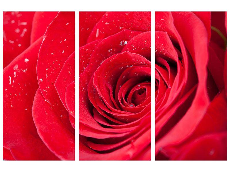 Aluminiumbild 3-teilig Rote Rose im Morgentau